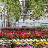 Horticultura Oleander – Vara 2015